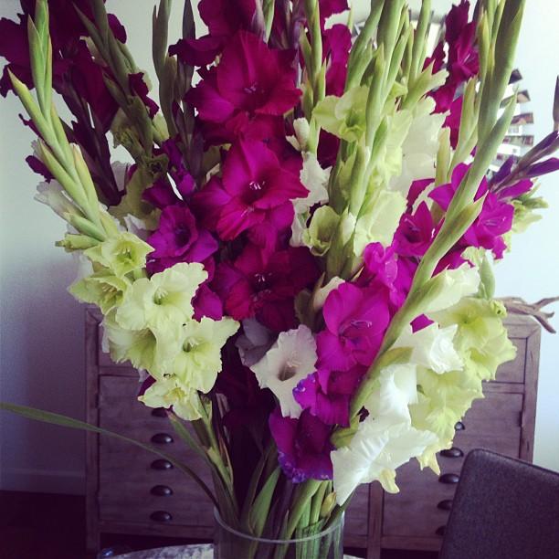 Flowers Always Bloom | Paige Davis blog
